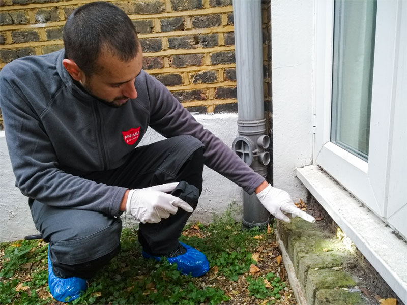 Mice inspection of an external entry point